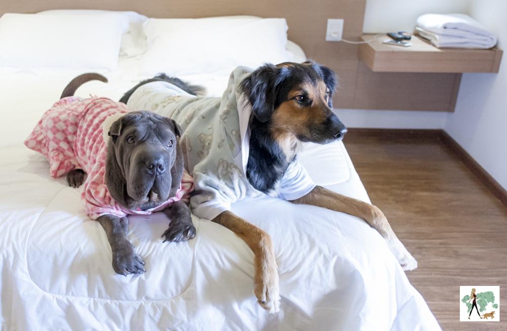 cachorros deitados na cama