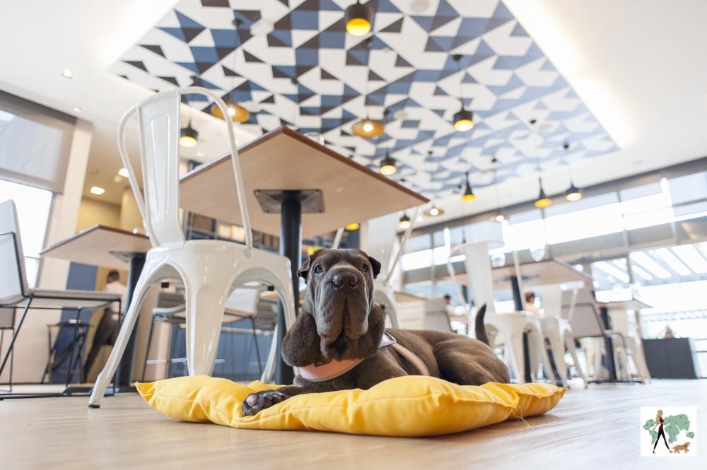 cachorro deitado no chão em frente as mesas