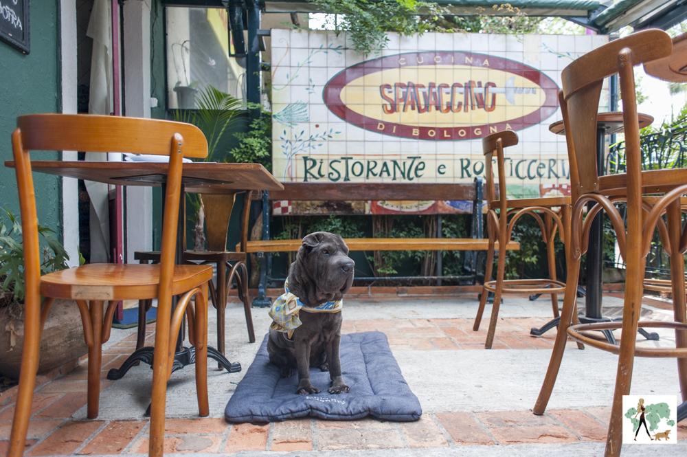 cachorro sentado no chão do salão do restaurante