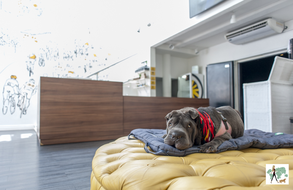 cachorro deitado no sofá em frente ao balcão da recepção