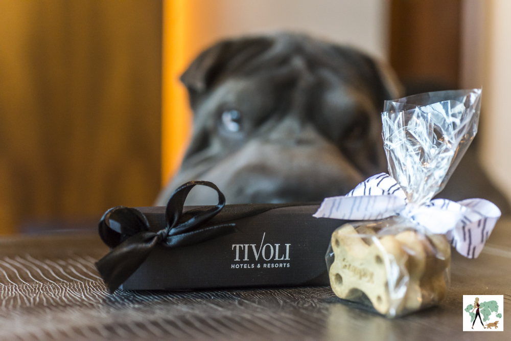 cachorro olhando para caixinha e biscoitos