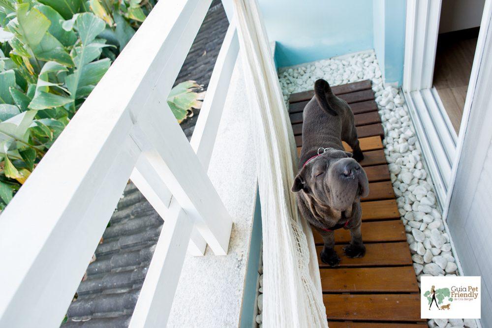 cachorro na varanda da pousada
