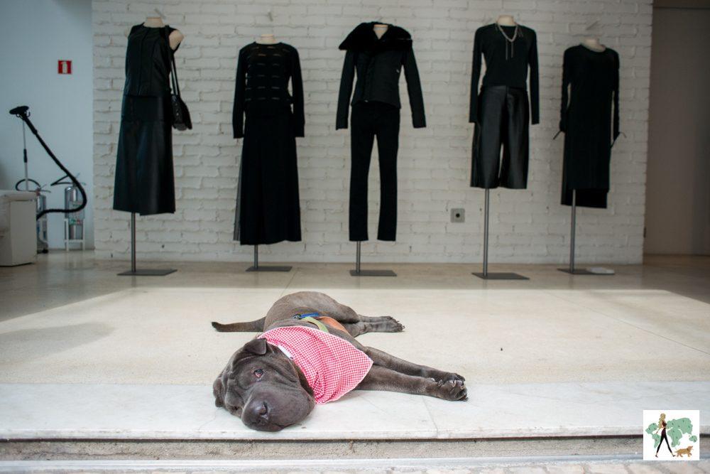 cachorro deitado no chão da loja