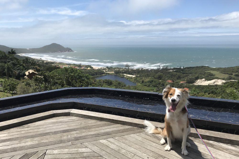 cachorro sentado no deck de pousada com vista para a praia e mar