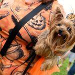 mulher segurando no braço cachorro fantasiado