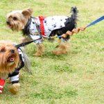cachorros fantasiados no jardim