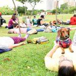 pessoas e cachorros no parque
