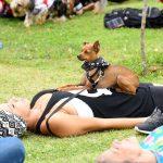 mulher deitada no jardim com cachorro em cima