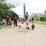 pessoas passeando com cachorros no parque