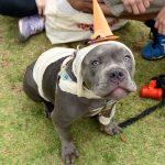 cachorro com chapéu de festas sentado na grama