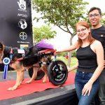 casal sorrindo com cachorro cadeirante