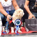 cachorro com necessidades especiais fantasiado