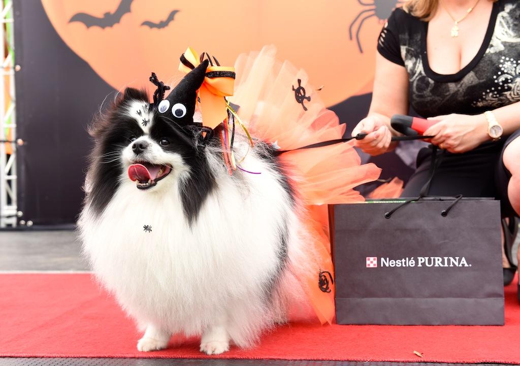 cachorro fantasiado de halloween