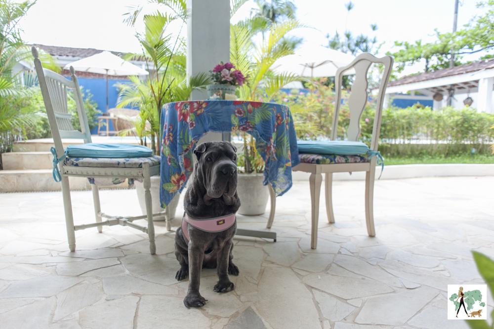 cachorro perto da mesa