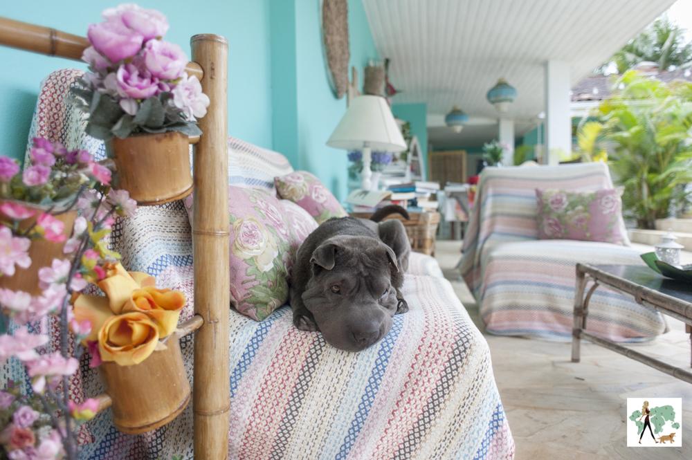 cachorro deitado no sofá