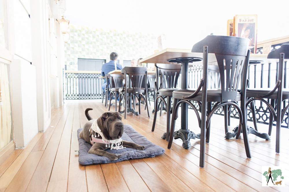 cachorro em cima de almofada em restaurante