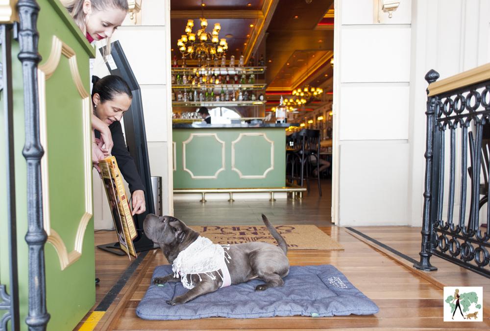cachorro em restaurante olhando o cardápio