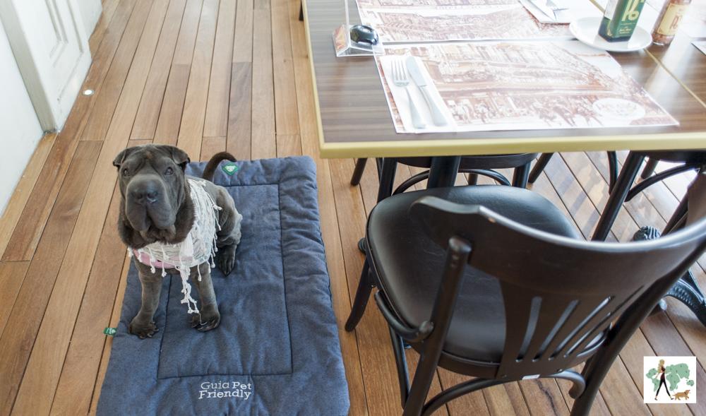 cachorro deitado em almofada ao lado da mesa