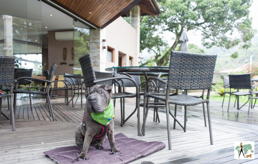 cachorro sentado no deck em frente as mesas e cadeiras