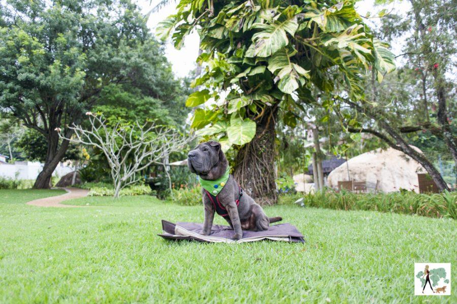 cachorro sentado no gramado