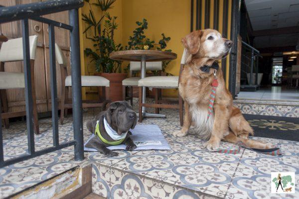 cachorros na frente do restaurante