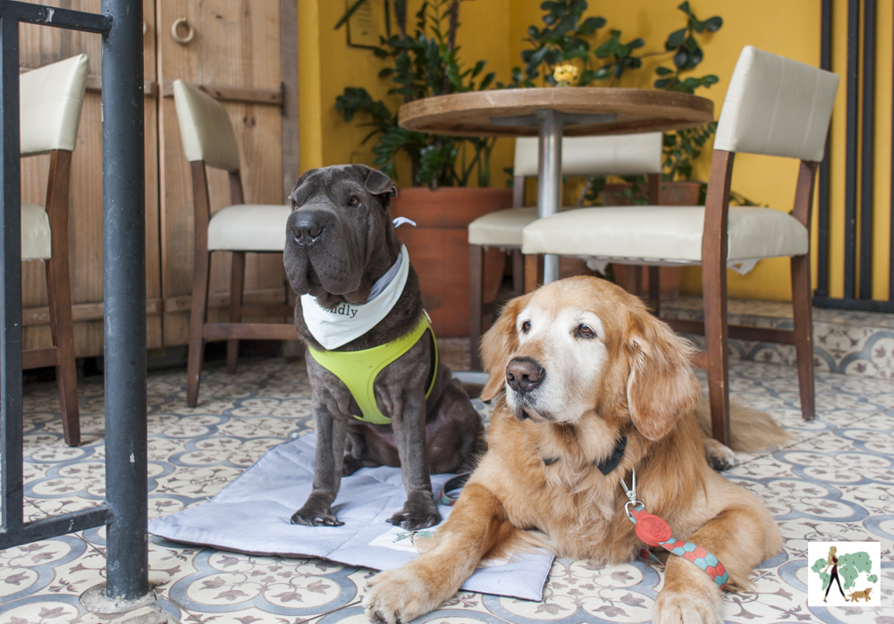 sharpei e golden retriever em restaurante
