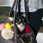 cachorro dentro da bolsa