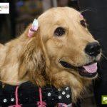 cachorro com laço nas orelhas