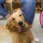 cachorro deitado com laço na rosa nas orelhas