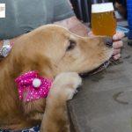 homem segurando chope/chopp ao lado de cachorro com laço rosa na cabeça