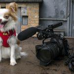 cachorro sentado ao lado da cãmera fotográfica