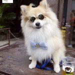 cachorro sentado com óculos
