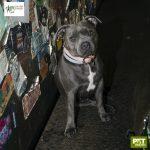 cachorro sentado ao lado de paredes com adesivos