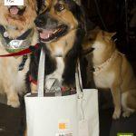cachorro com bolsa envolta ao pescoço
