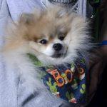 cachorro enrolado no manto de apoio