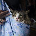 moça segurando gato