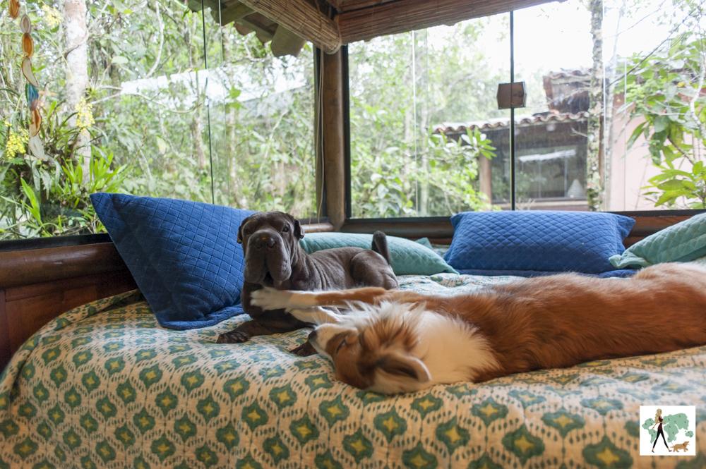 cachorros brincando em cima da cama
