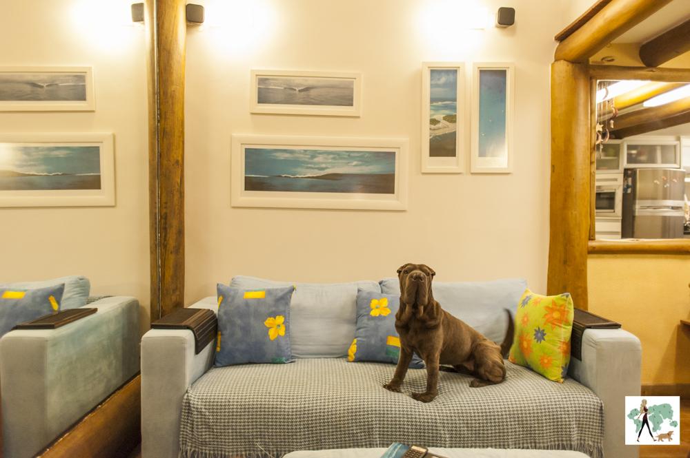 cachorro em cima da sofá de casa