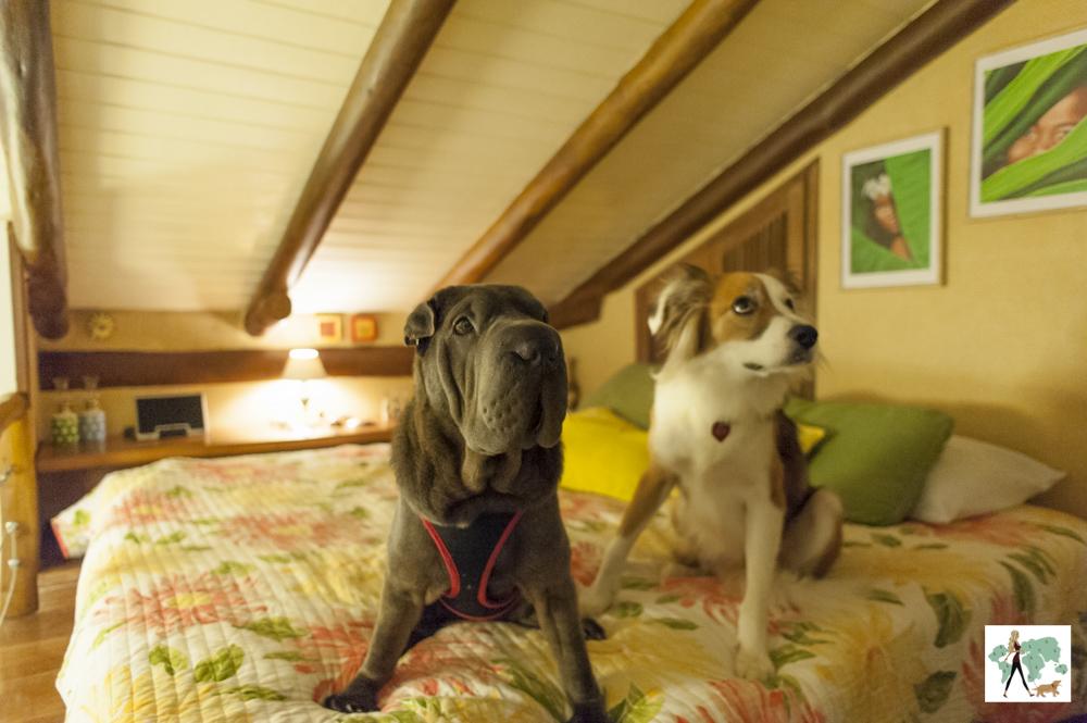 cachorros em cima da cama com teto em V