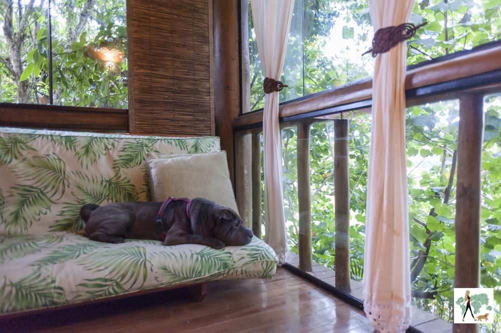 cachorro deitado em sofá