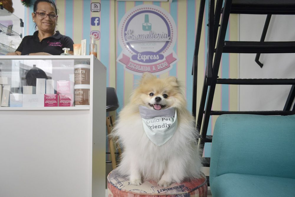 cachorro sentado dentro da esmalteria