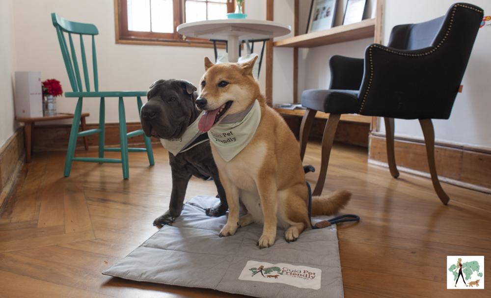 Cachorros sentados ao lado da mesa
