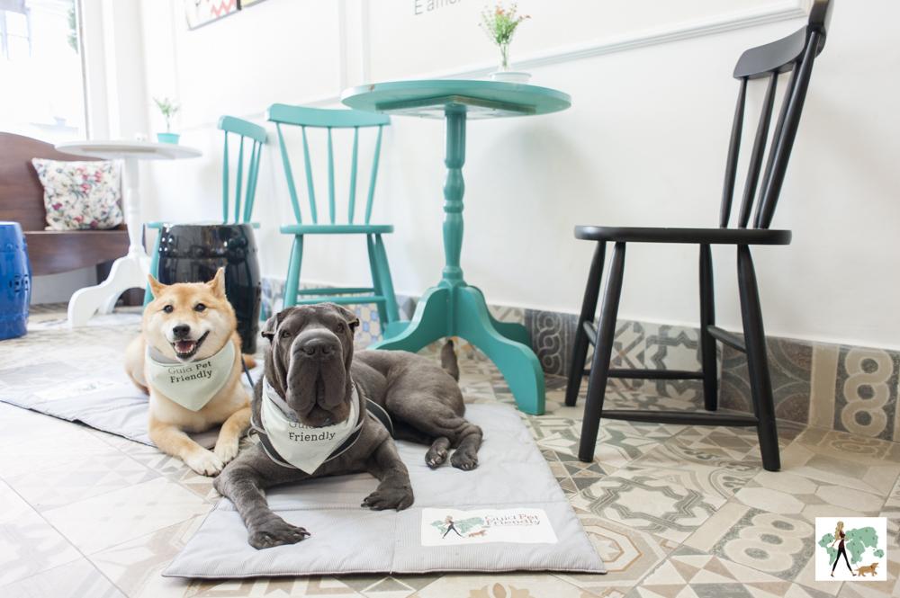 cachorros deitados numa sorveteria