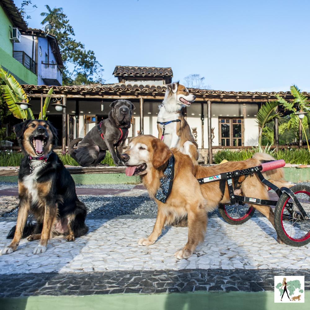 cachorros na frente de pousada