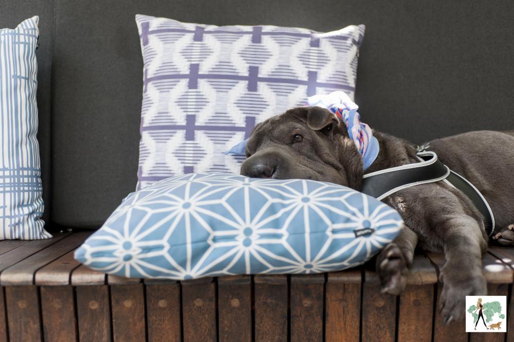 cachorro deitado com a cabeça apoiada em almofadas