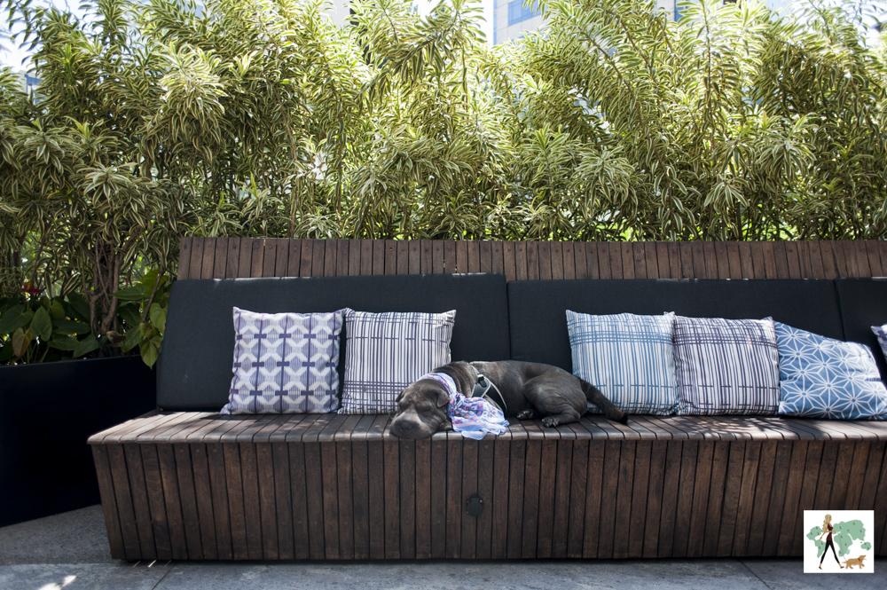 cachorro deitado em cima de lounge do hotel Hilton Morumbi