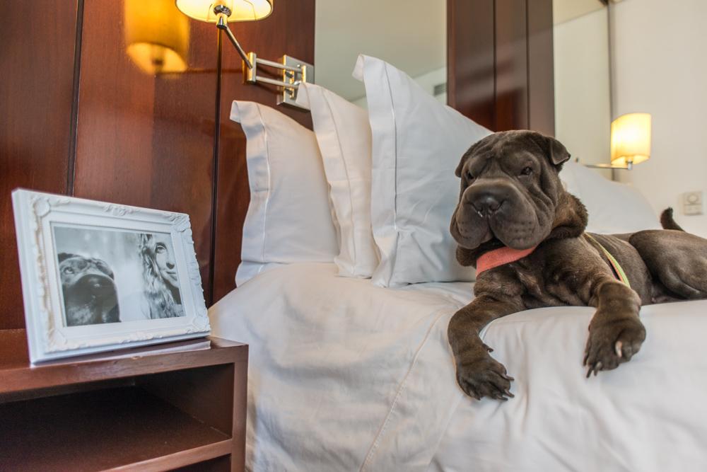 cachorro deitado na cama ao lado de porta retrato