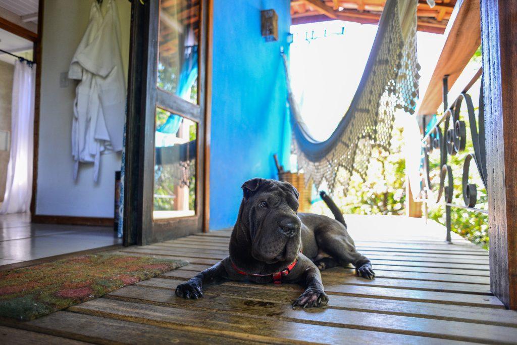 cachorro deitado na varanda