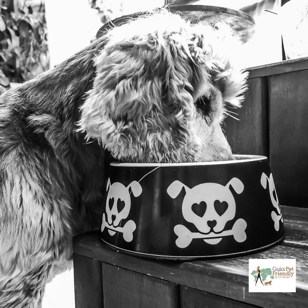 cachorro comendo em comedouro com imagem de caveira