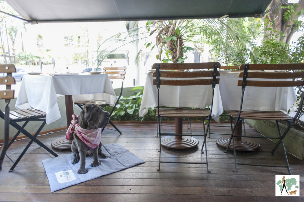 cachorro na varanda do restaurante Ton Ton